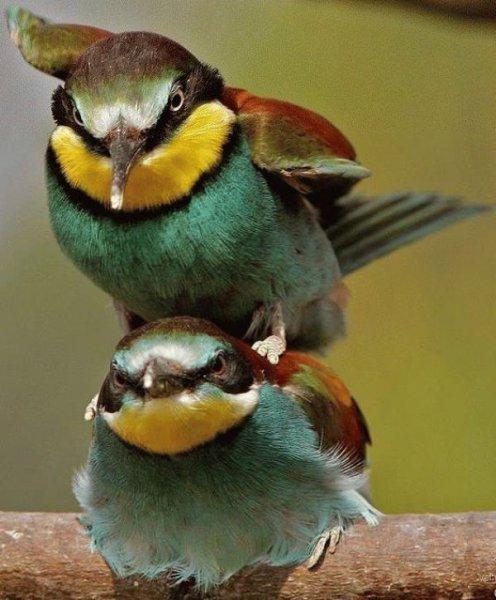 Птицы галерея 1 фото 1